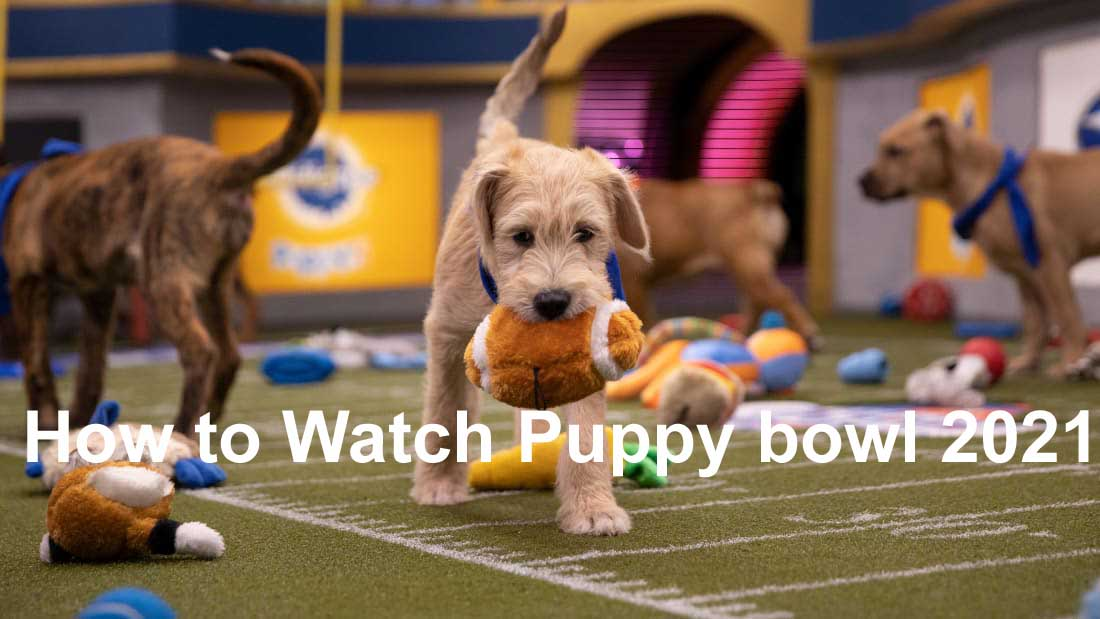 How to Watch Puppy Bowl 2021 Live Stream